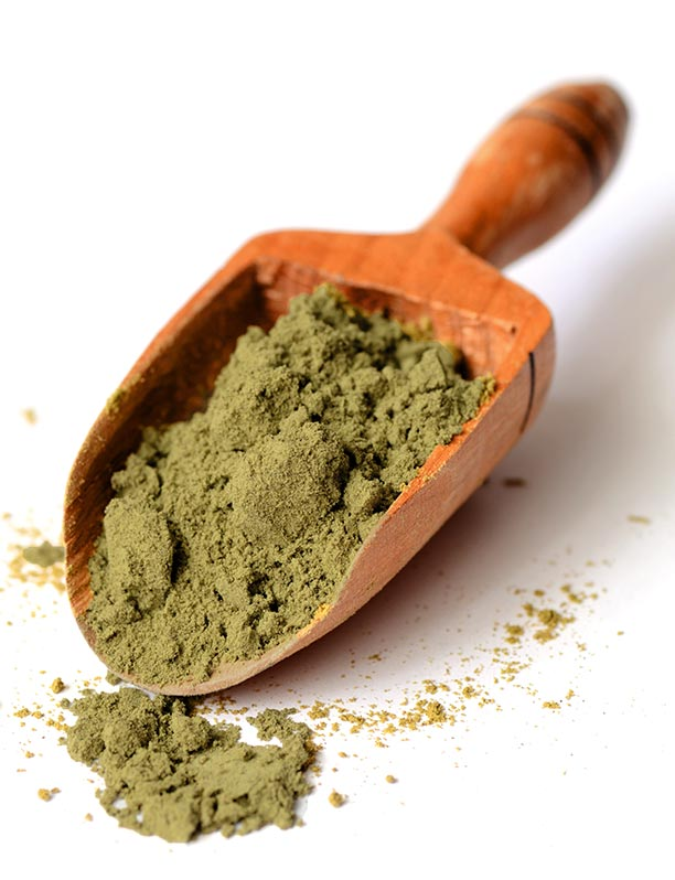 Hemp Protein Powder Scoop