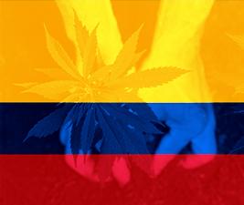 Hemp seeds in columbia
