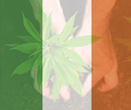 Ireland Cannabis
